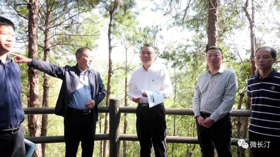 长汀县领导调研水土流失精准治理深层治理工作