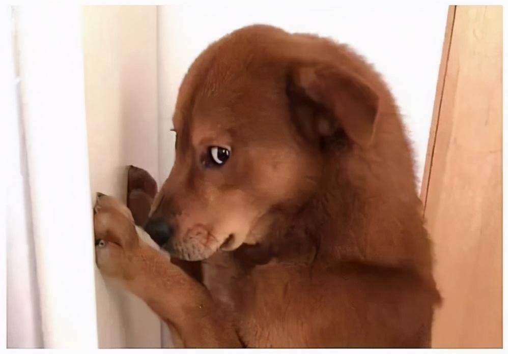 """研究发现,过得好的狗狗,都有""""共性""""的"""