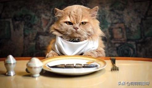 猫咪专属餐,六个小妙招,教会你制作营养实惠的猫饭