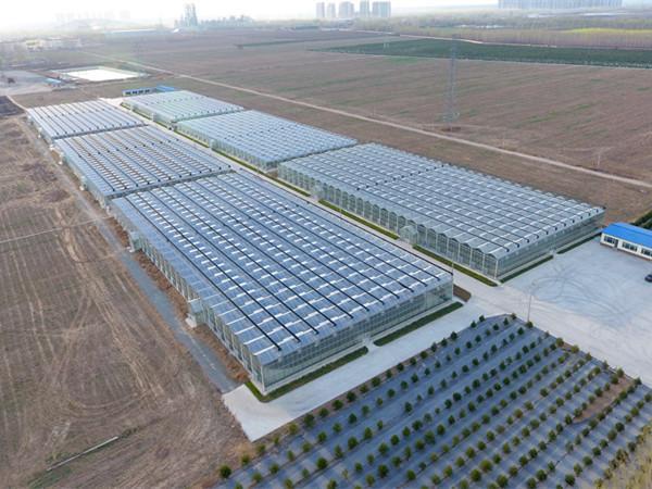 恒温恒湿智能玻璃温室大棚除湿解决方案、智能温室设计建造方案