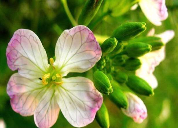 看了李子柒的鲜花宴,活了几十年,才知道,这些鲜花都能吃