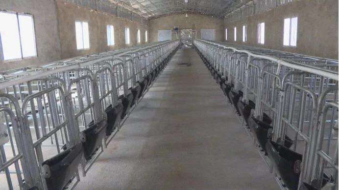 现代化养猪场,看了4步之后,你就会知道该怎么建设猪场