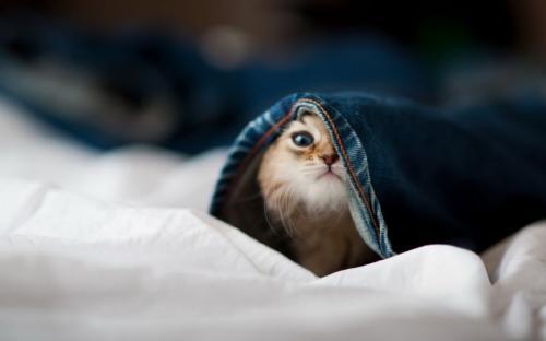 幽默笑话:今天下班回家,我刚到家门口,看到有个人正在砸门