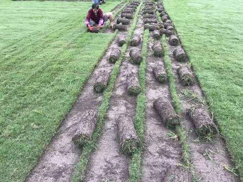 绿化草坪种类图片大全(全),不同的草坪用途和功能都不同