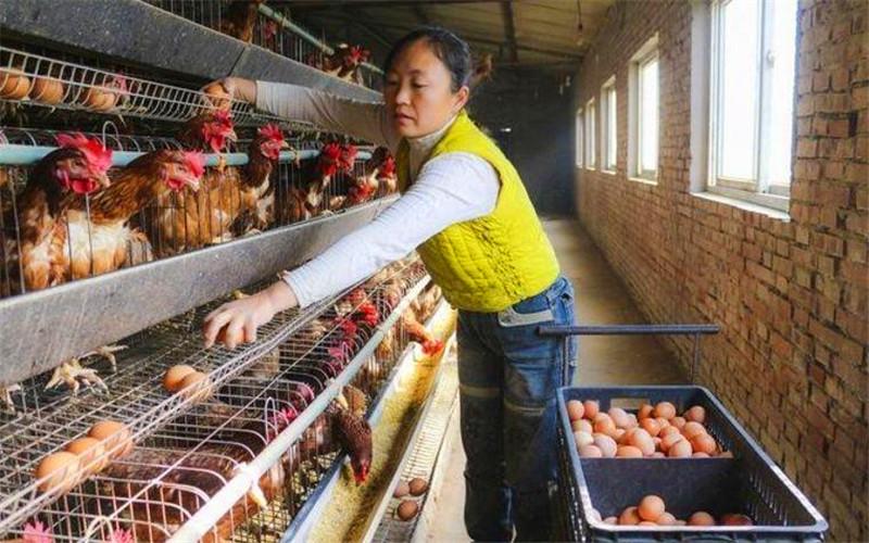 现在农村养殖业,有哪些比较稳妥又具备发展前景的项目?推荐一下