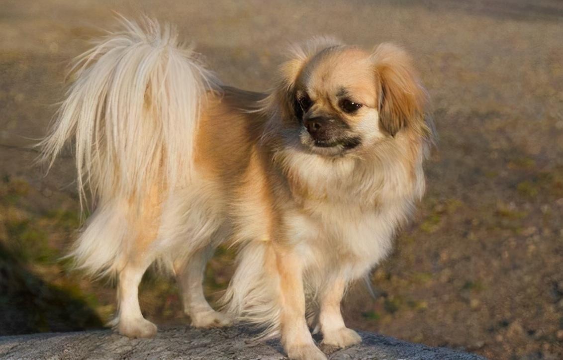 """盘点那些""""国产""""的8种狗,每一种都值得被珍惜"""