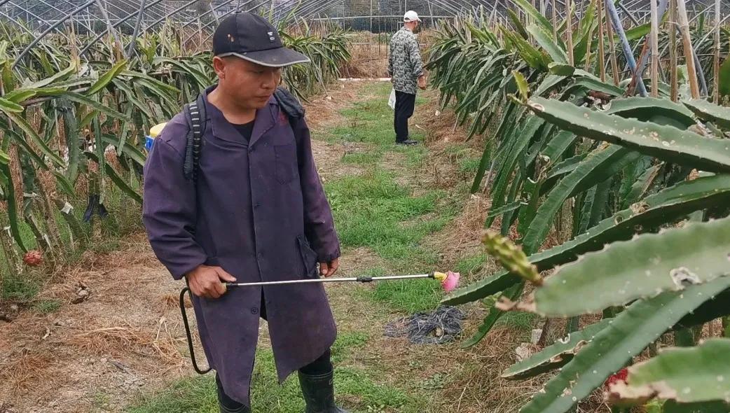 我县大力发展果蔬产业 提升农业生产效益