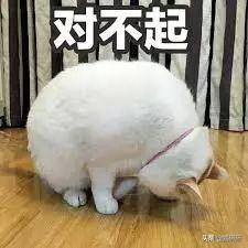 家中尿騷撲鼻?解決貓咪亂尿7步驟