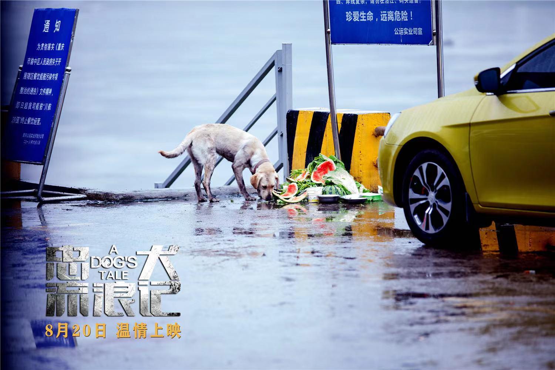 《忠犬流浪记》:道阻且长流浪远方,只为重温最初陪伴