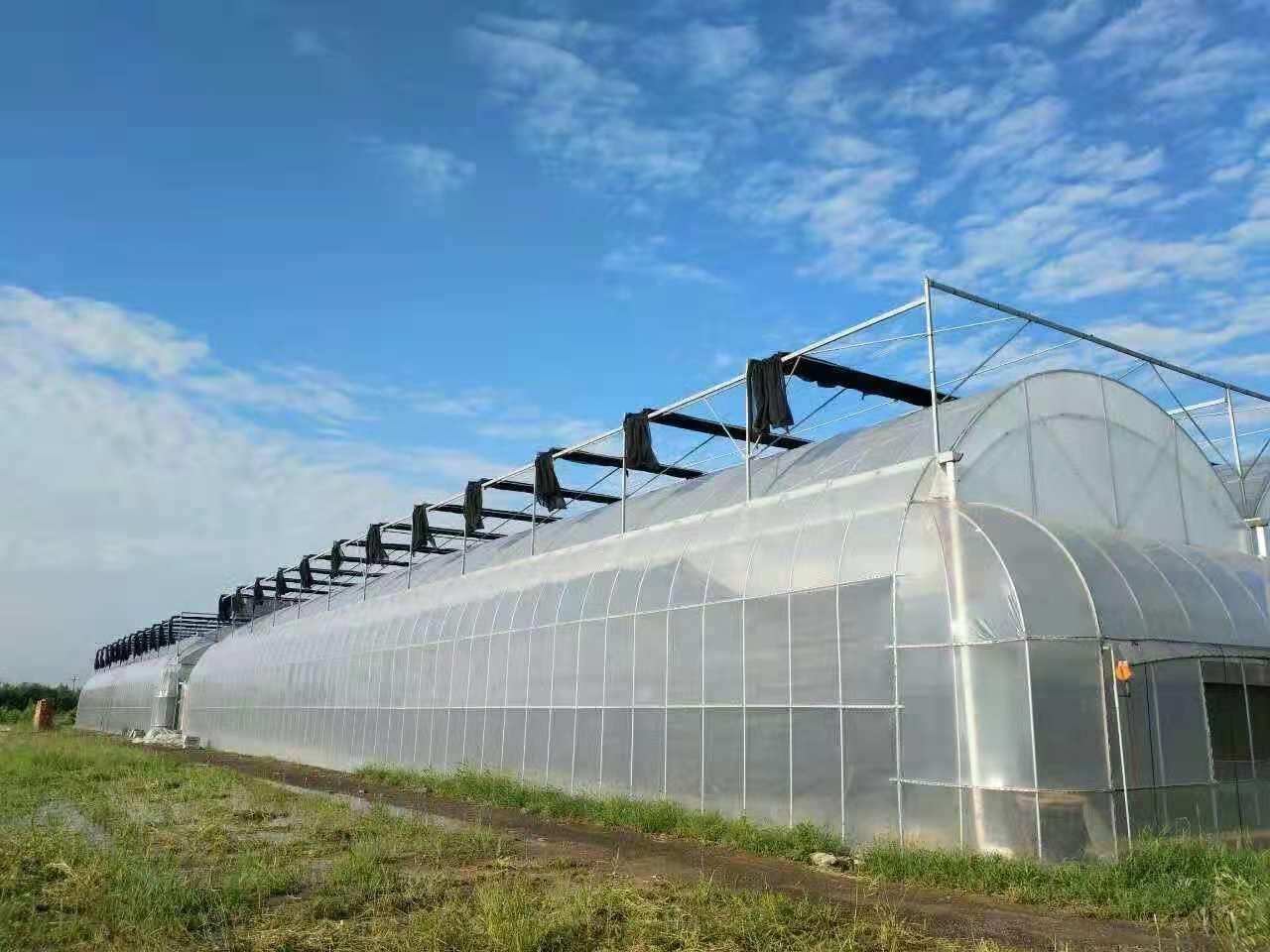 连栋温室大棚薄膜类型如何选择、薄膜种类以及特点