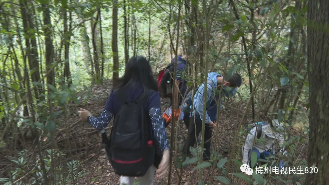 广东祖孙3人食用毒蘑菇致死,凶手又是它,别采别吃