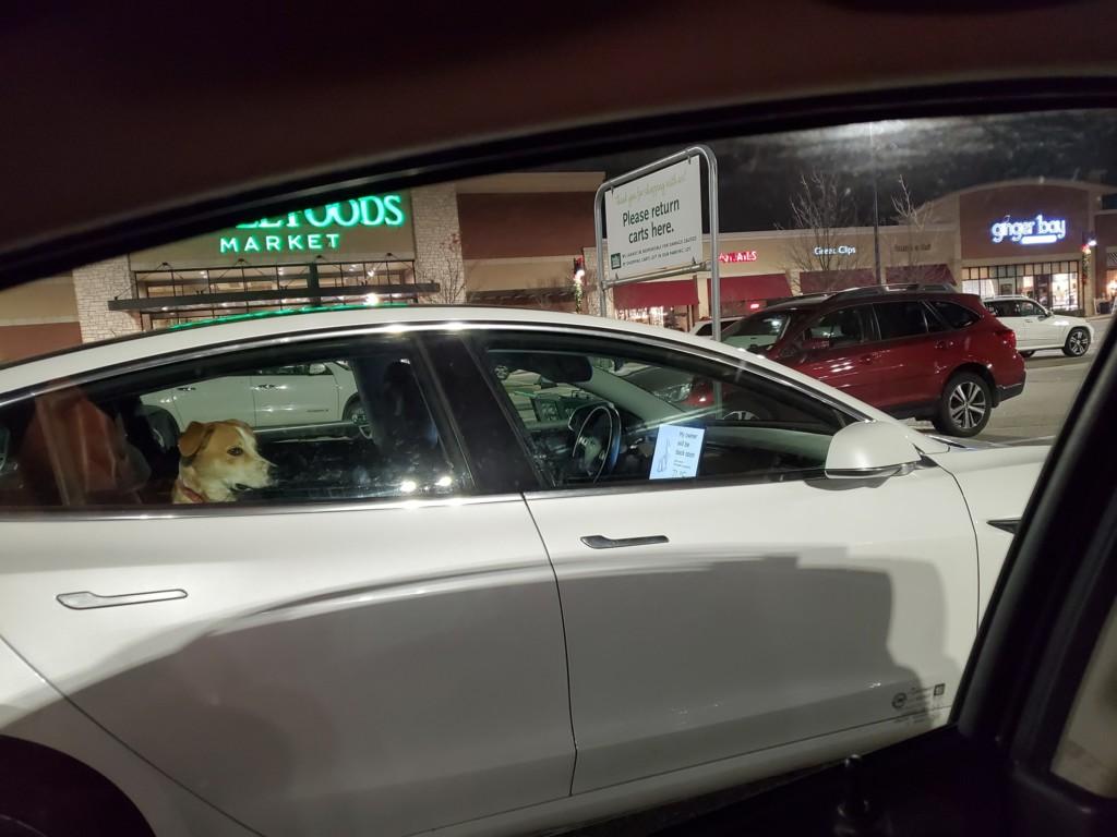 网友看到狗子被困车内,欲砸窗营救,走近看清之后果断放弃