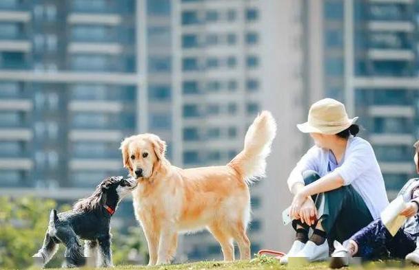 别不信,这几类人最不适合养狗,并不是偏见