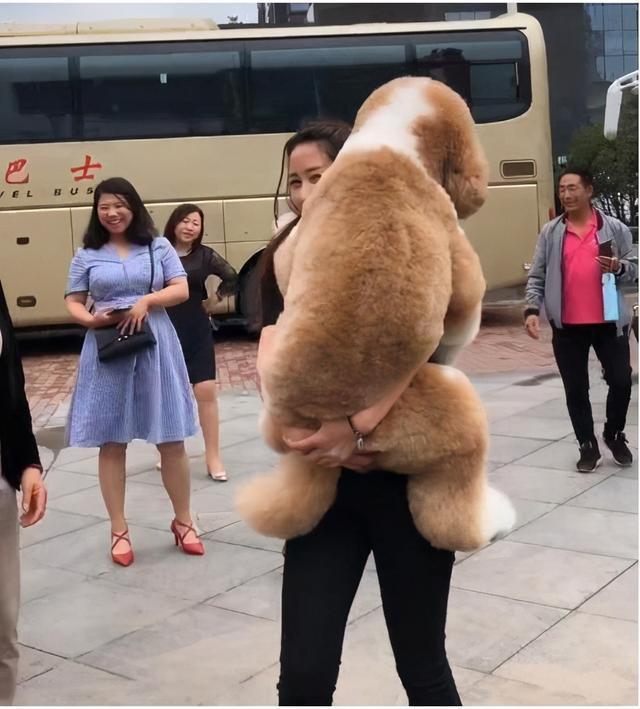 一条狗是否信任你,多半看这5个动作