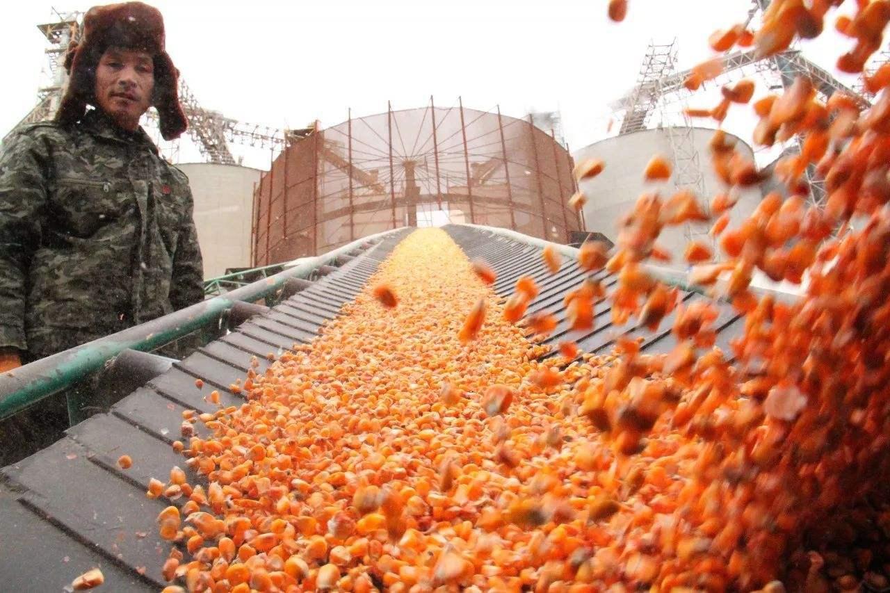 刚刚大北农签署转基因玉米商业化开发协议 美国玉米进口暂缓