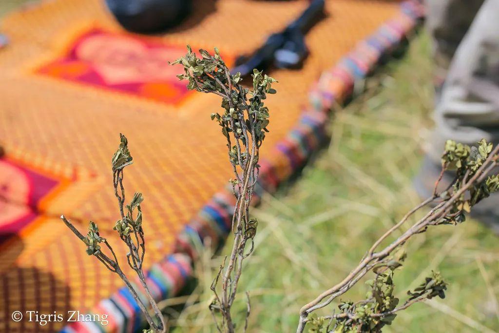 若尔盖生态训练营番外篇—藏民牧场生活体验