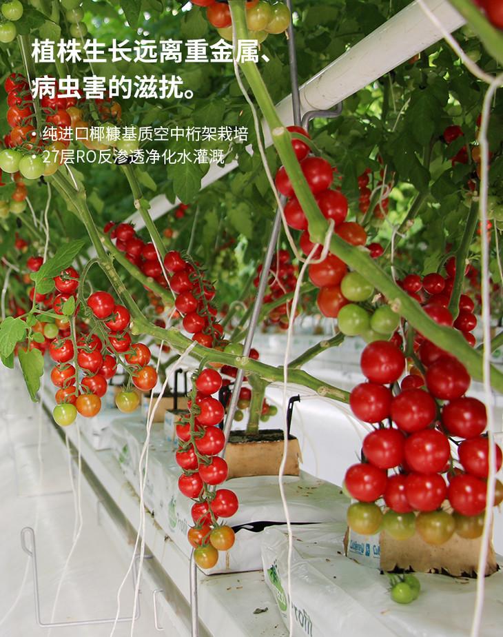现代化温室大棚在农业中的应用,对于传统温室大棚有何不同