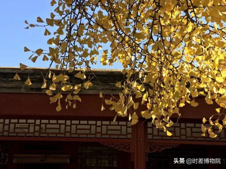 寻访西山大觉寺,感受千年银杏下的京郊秋色与历史况味