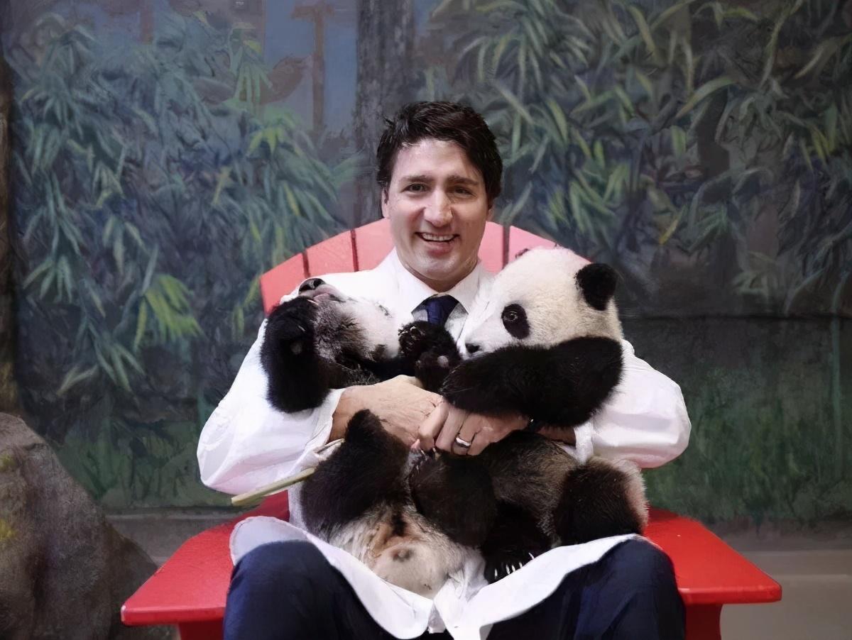 我们的国宝凭什么要被这样虐待?把熊猫美香从美国接回家
