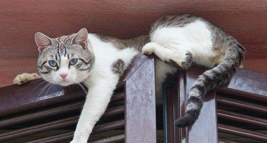 猫咪欢迎主子回家的四种方式,你家猫咪属于哪一款?