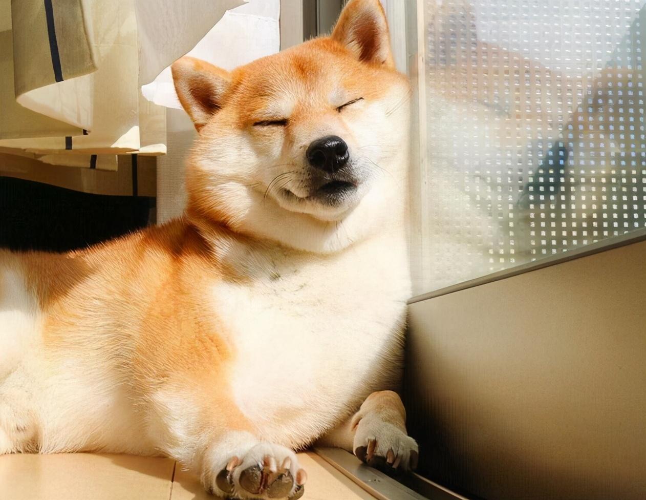 如何判断狗狗信不信任你?从睡姿就能了解