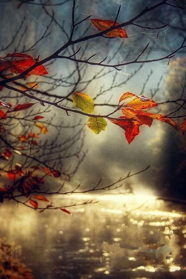 秋色如画 禅意淡然