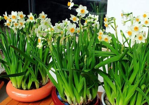春天开的花有哪些,春季赏花不要错过了!
