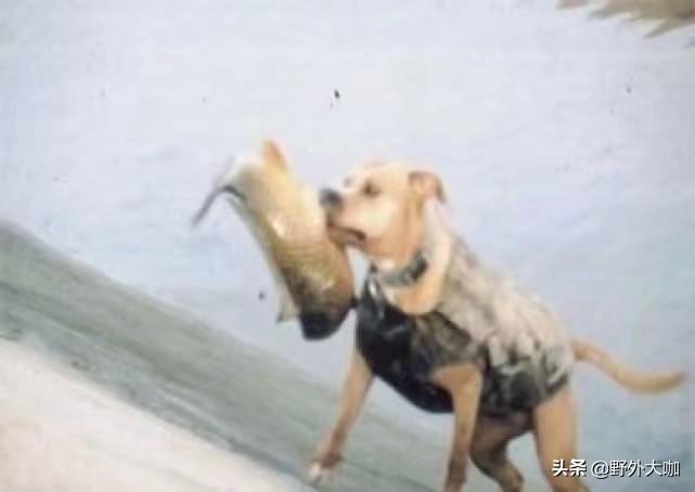 老人收養奄奄一息的流浪狗,流浪狗為報恩,做的事情讓人讚不絕口