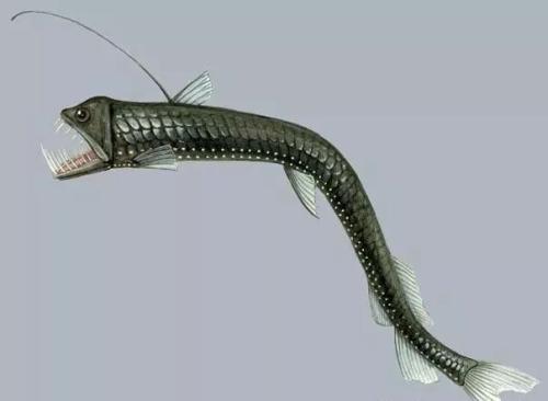 世界上最怪异的5种鱼,你见过吗?