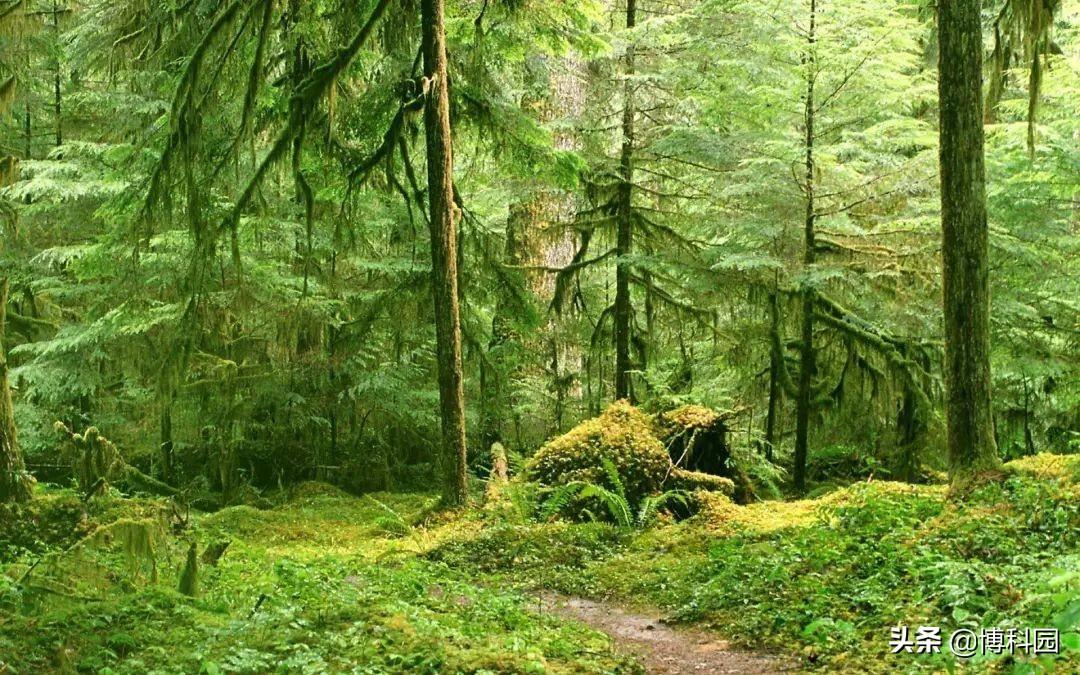 古老的森林能够抵抗气候变化?但是人类,你可以吗?