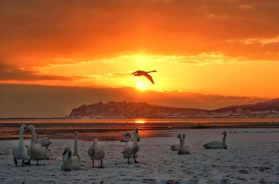 元旦 | 迎着新年第一缕阳光,迈向新征程!