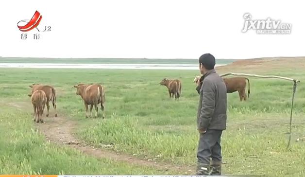 """上饶沭阳:养牛的被告知不能养牛。他们说""""以前没有混乱。"""""""
