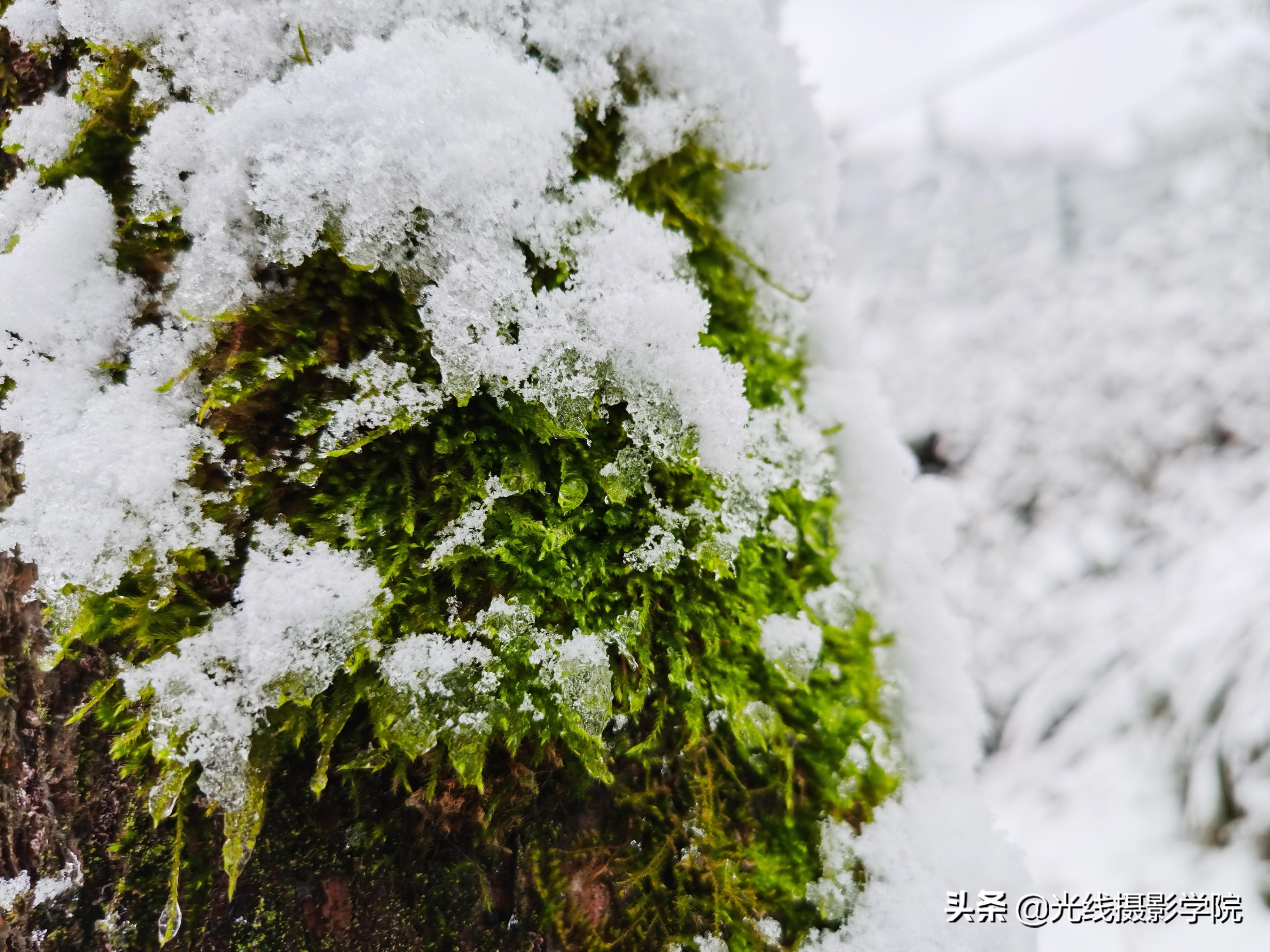 2020年冬季,重庆仙女山雪景行摄攻略,冰雪旅游问题完全解答