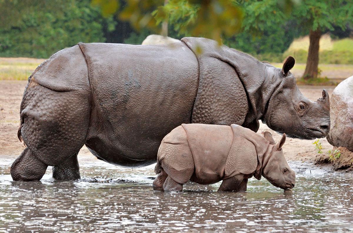长颈鹿未来或将悄无声息灭绝,第6次生物大灭绝正在发生