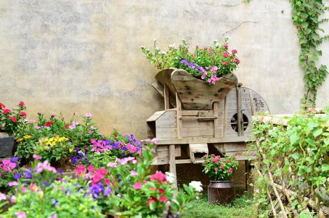 10个养花常识,杜绝黄叶落叶,花儿蹭蹭长 家务卫生 第1张