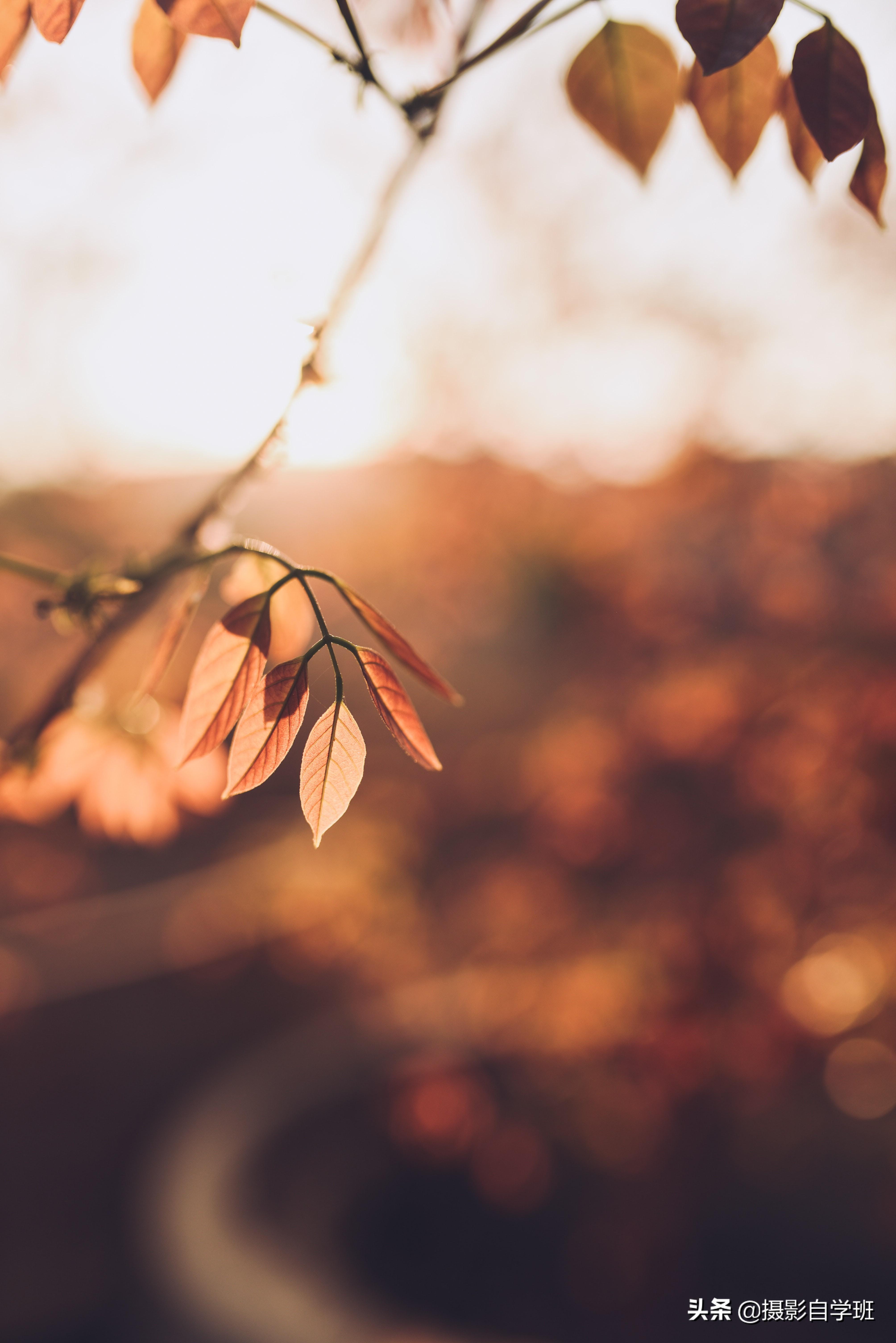 拍秋景八大技巧,用21张风光摄影作品解说,新手模仿拍就可以啦