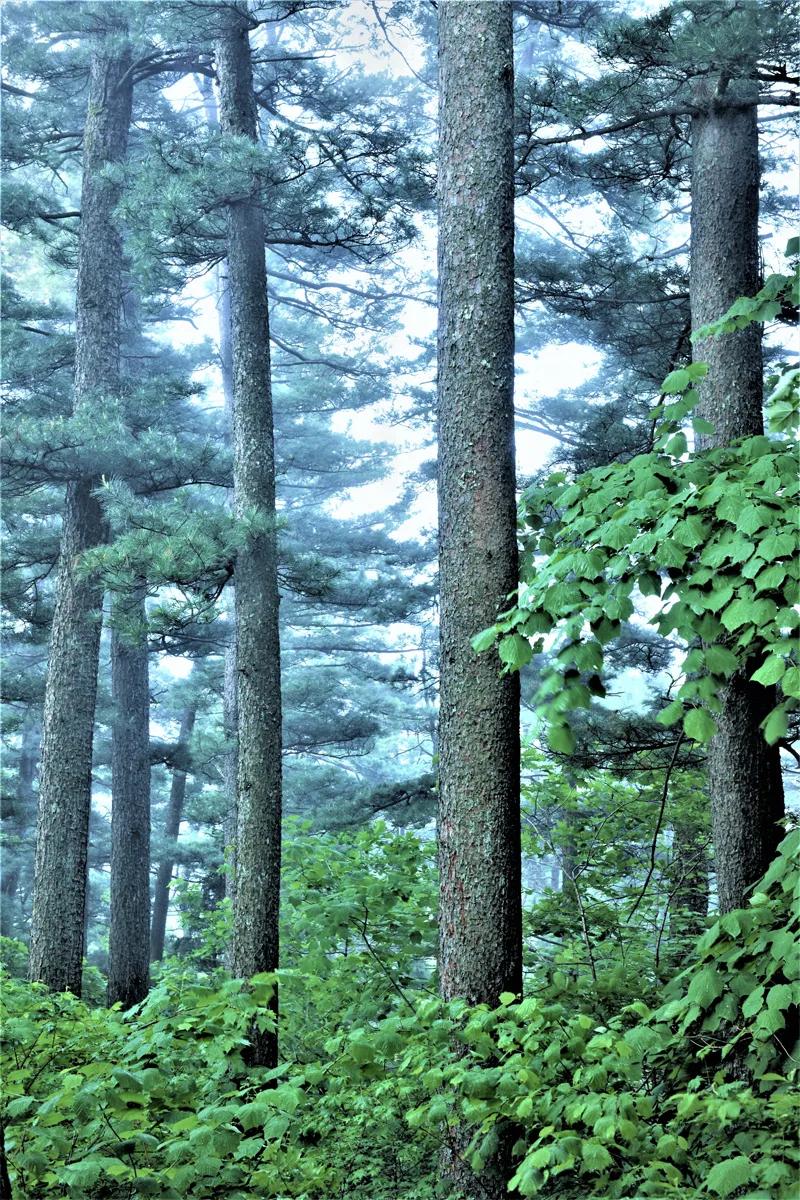 伊春 | 夏日繁华似锦的林都