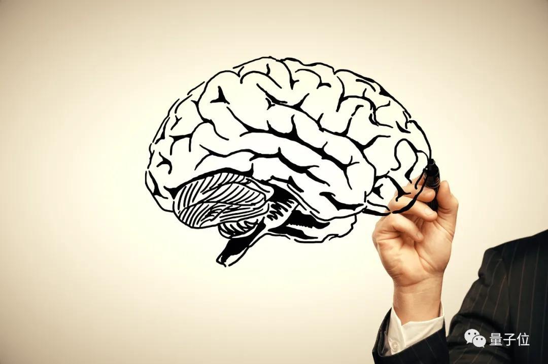Science:导入了人类特有基因后,猴脑有了进化的趋势