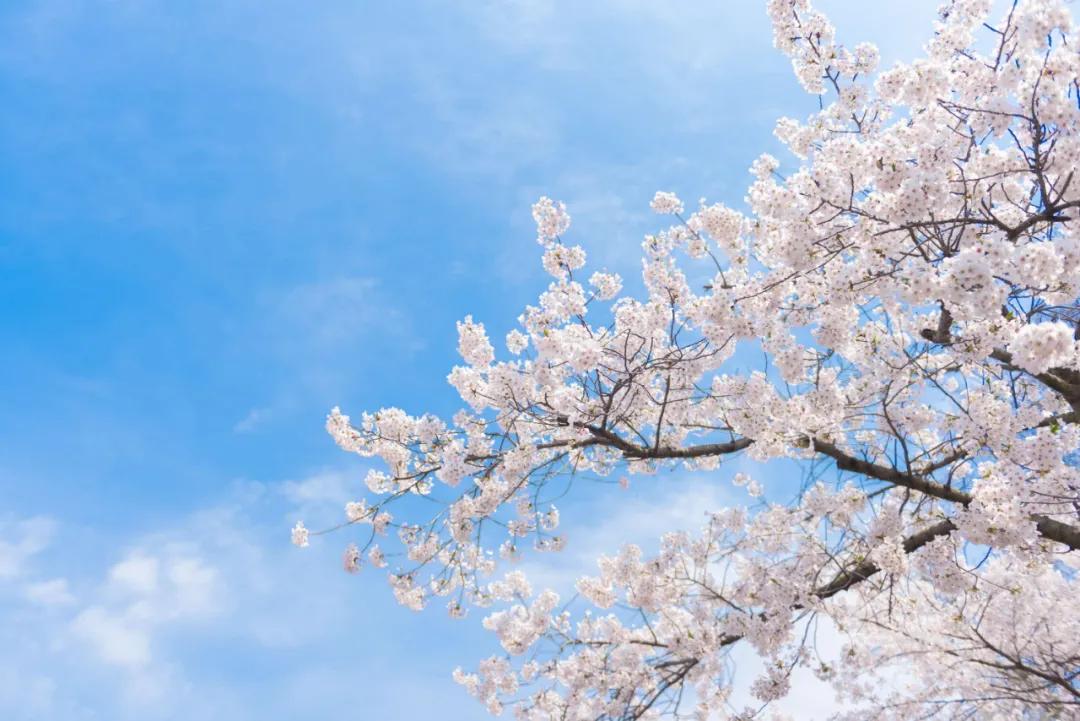 32首春分诗词,遇见最美春日时光!