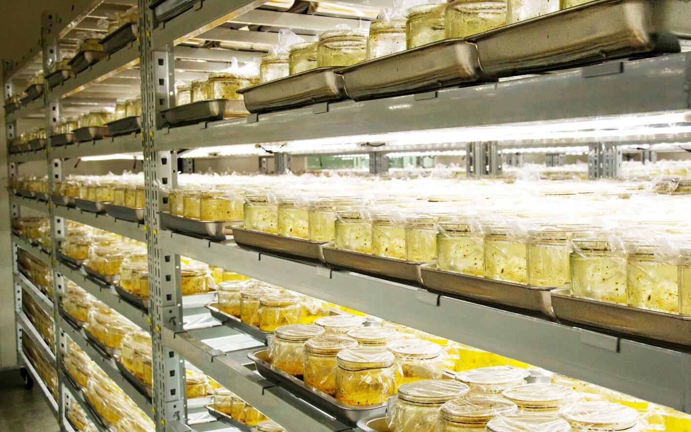揭秘康能虫草素的什么面纱,行业领先技术,十年研究结晶
