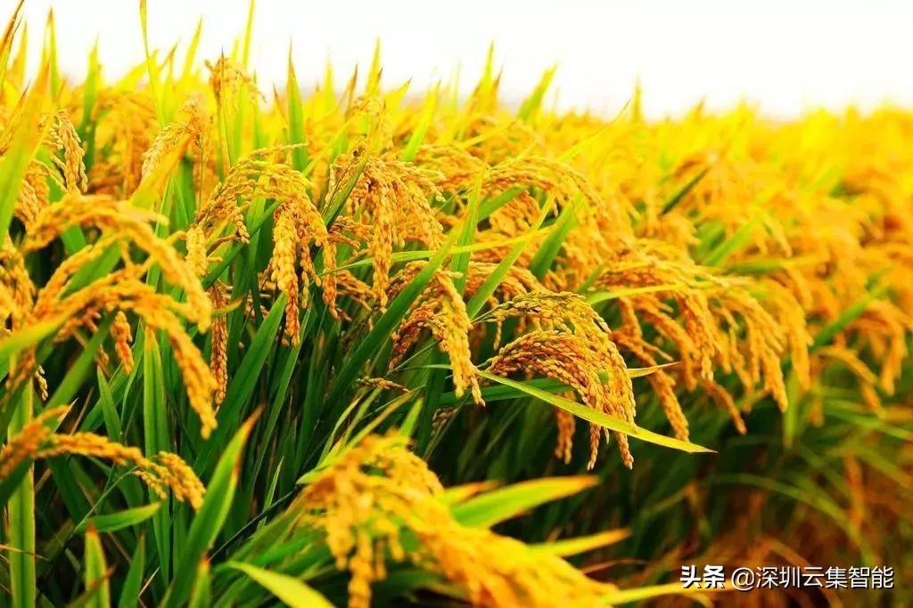 社区新零售:看鲜米怎么走进千家万户,切入社区消费市场