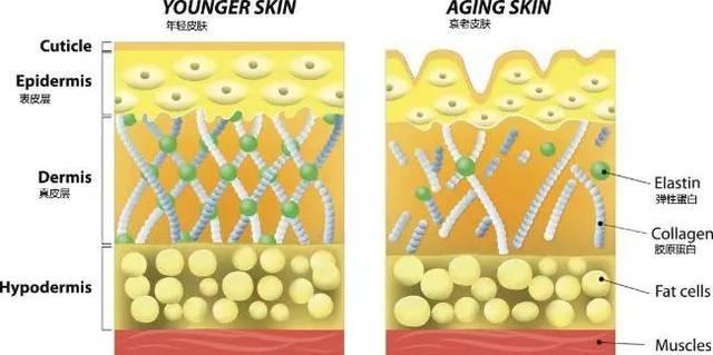 想要比同龄人老得慢,坚持这3个好习惯,皮肤会逐渐细腻有光泽