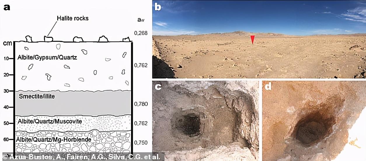 世界干极地下约28厘米处,发现微生物存在,说明火星也有生命?