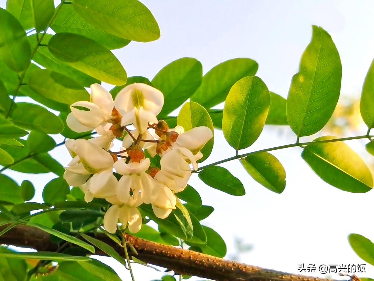 """4月是""""吃花""""的季节,味道清香甘甜,季节性强,早吃早尝鲜 美食做法 第3张"""