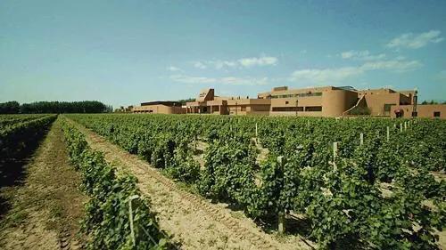 新疆:打造丝绸之路经济带优质、高端葡萄酒的核心产区