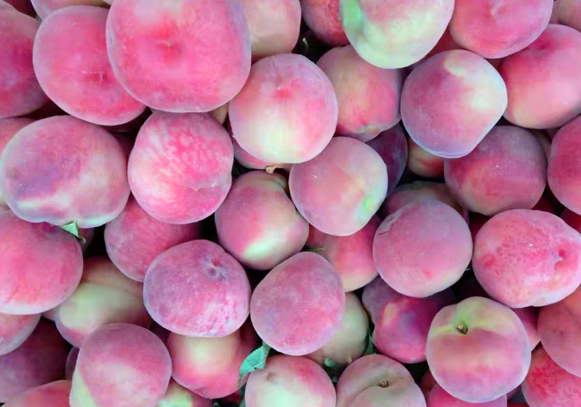 老果农:桃子甜不甜,看一眼这里就知道,一挑一个准,快捷又实用