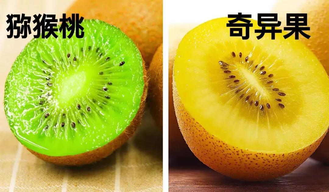 奇异果和猕猴桃,提子和葡萄到底是不是同一种水果,哪个更营养?