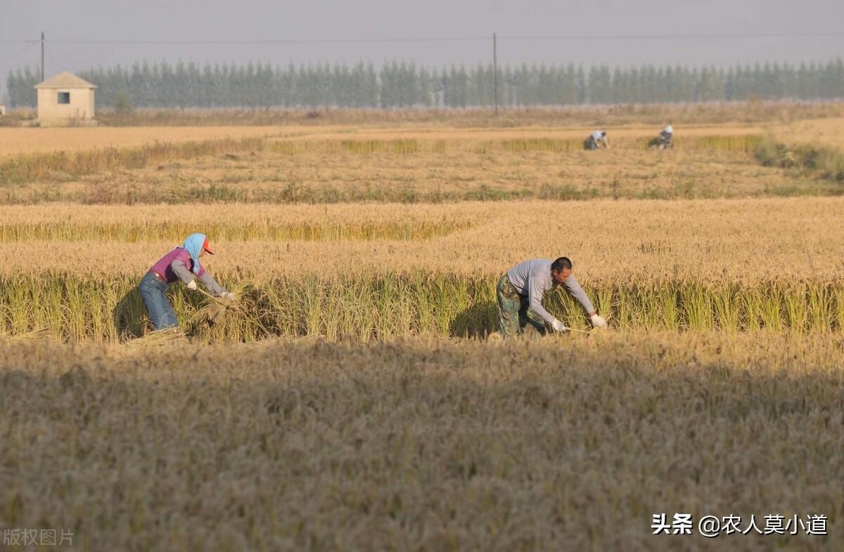 农村土地如何给农民工带来更高的收益?怎么做才可以呢?