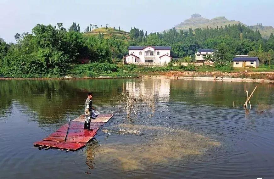 恰当的渔药施用方法不能忽略或掉以轻心,否则钱花了鱼病也没治好