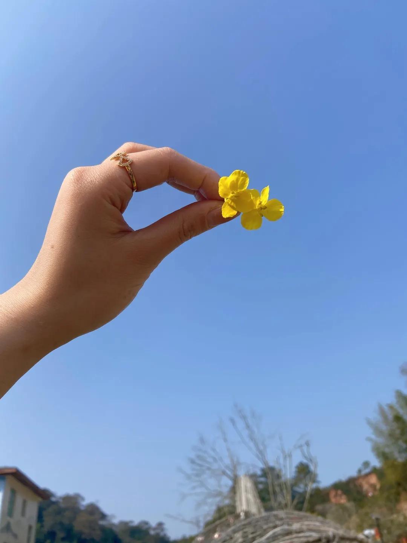 """哟~周末共赴花海赏春光,打卡长汀濯田寨头""""明亮黄"""""""